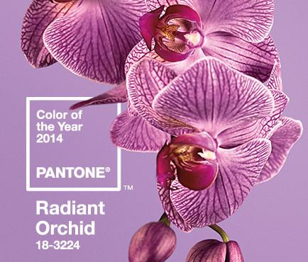 orquídea pantone 2014