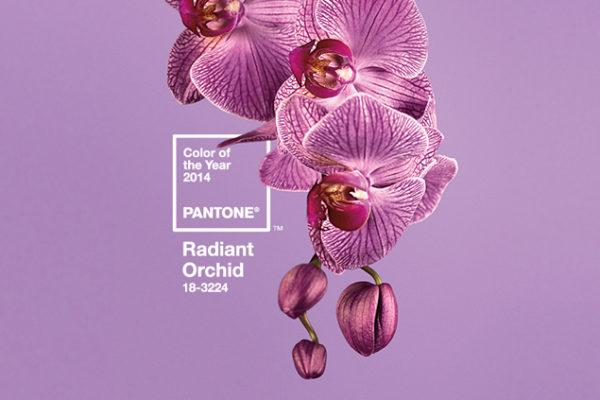 el color orquídia marcarà les tendències aquest 2014